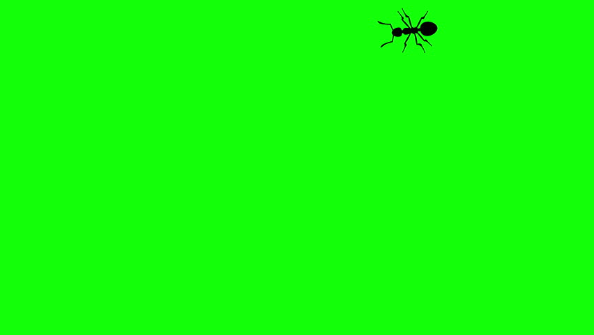 Ant on green screen, CG animated silhouette, seamless loop
