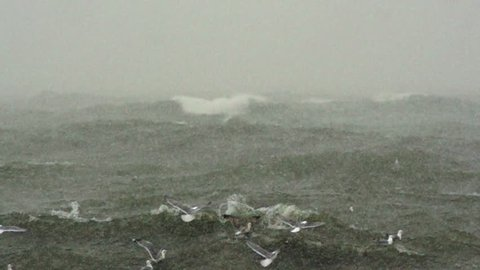 Seagulls flying over the raging sea. Slow motion.