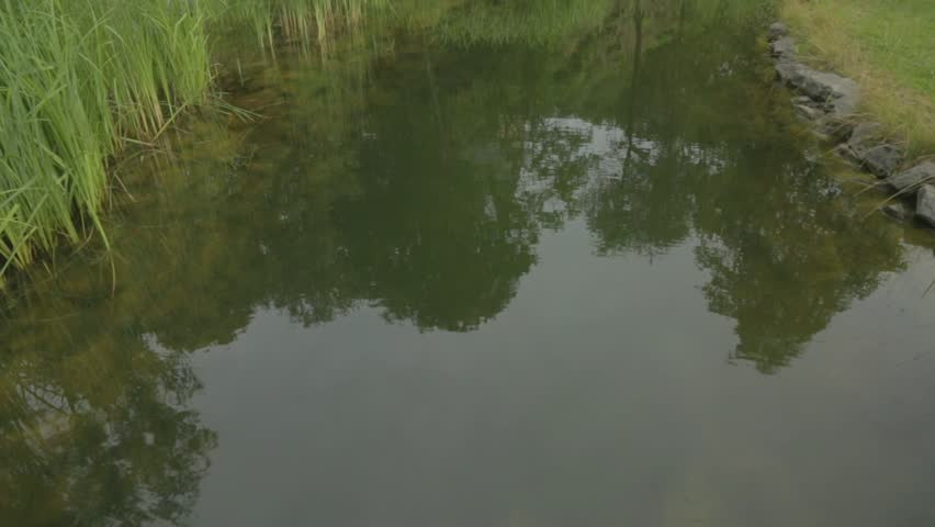 Vertical panoramic in natural garden lake and plants | Shutterstock HD Video #18379222