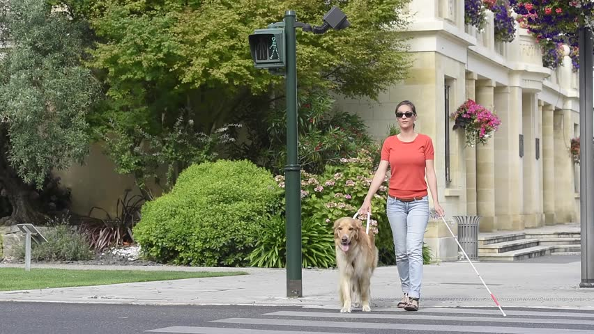 Blind woman crossing the street with help of guide dog #18456652