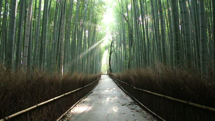 Light beam pierces through tall trees onto an empty path as nature bird sounds call out summer morning in Arashiyama Bamboo Grove forest, famous landmark in Kyoto, Japan. 60fps 720p stationary footage