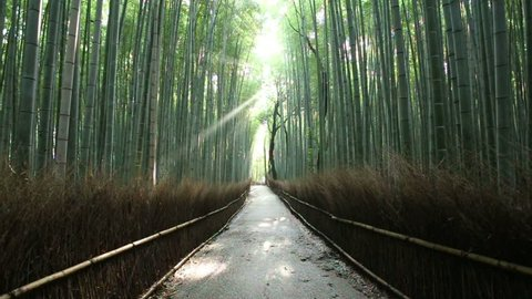 Light beam pierces through tall trees onto an empty path as nature bird  sounds call out summer morning in arashiyama bamboo grove forest, famous  landmark in kyoto, japan  60fps 720p stationary footage
