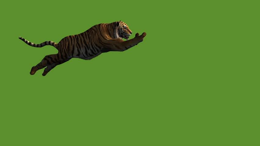 Tiger jumped to attack prey,wildlife animals habitat. cg_02005