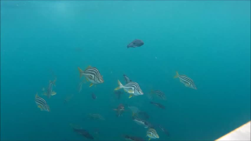 Fish knocking into camera, bloopers, funny moments