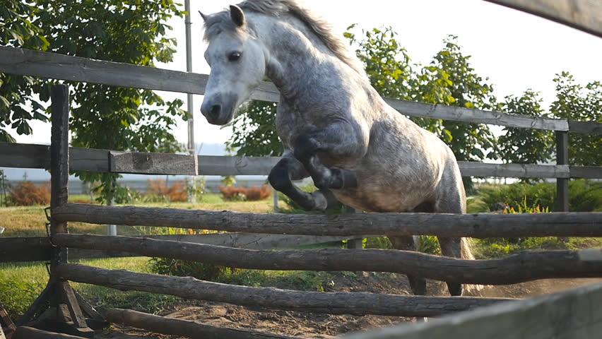 pony training domination porn tube