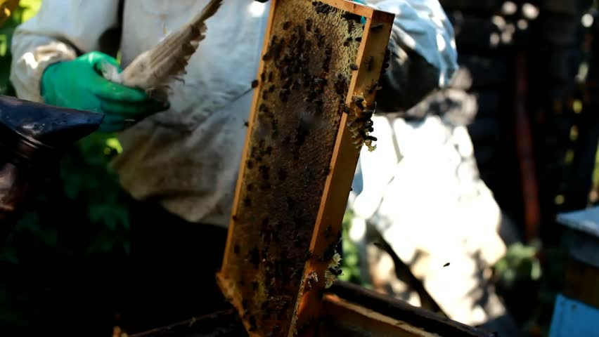 Beekeeper use a smoker to calm the honey bees #18775592