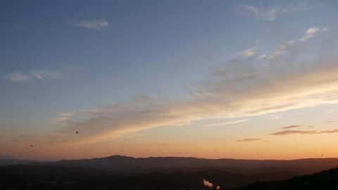 swallows flying in the sky in the sunset light.