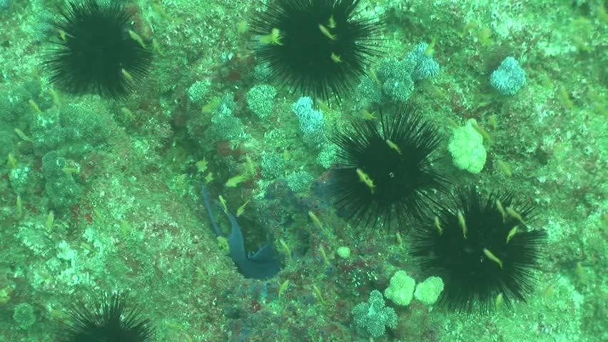 Coral life diving Mozambique South Africa Underwater Video | Shutterstock HD Video #18988882