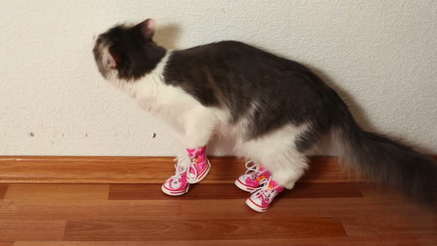 Cat in pink shoes sits on floor near white wall and then jumps