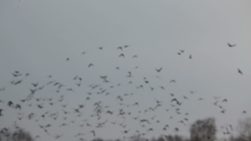 a flock of birds floating in the air in 1080x1920 HD video