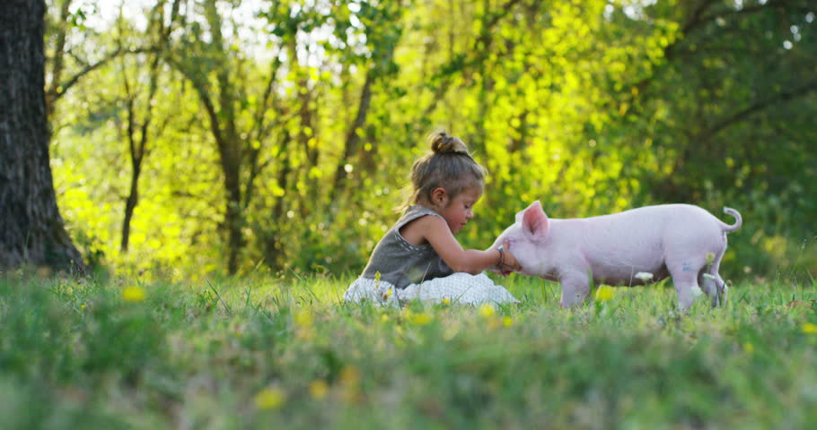 vegetarian child kisses a little piggy piglet on the nose. concept of nature and love for life and respect. concept of sustainability and renewable energy.  vegan happy in nature and life. piglets