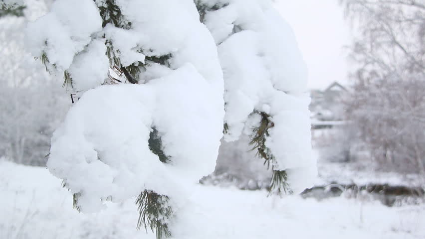 Heavy snow on pine branches   Shutterstock HD Video #19129861