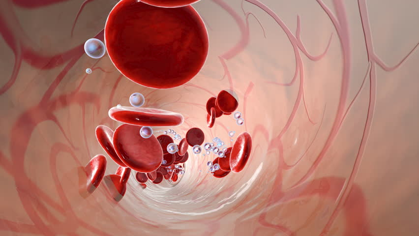 Bloodstream with flowing Erythrocytes and Oxygen.  | Shutterstock HD Video #19132762