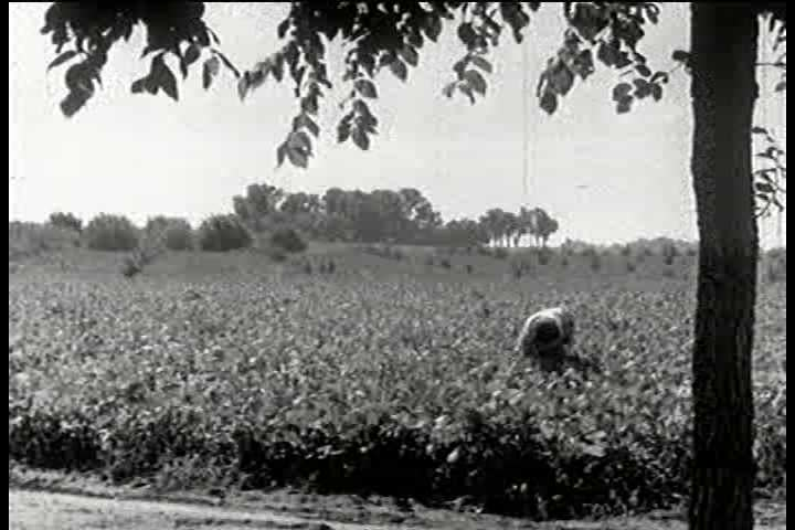 A soil expert, or agronomist, pays a visit to a farm where soybeans are being grown experimentally, and chats briefly to the farmer's wife about her soybean crop in the 1930s. (1930s)