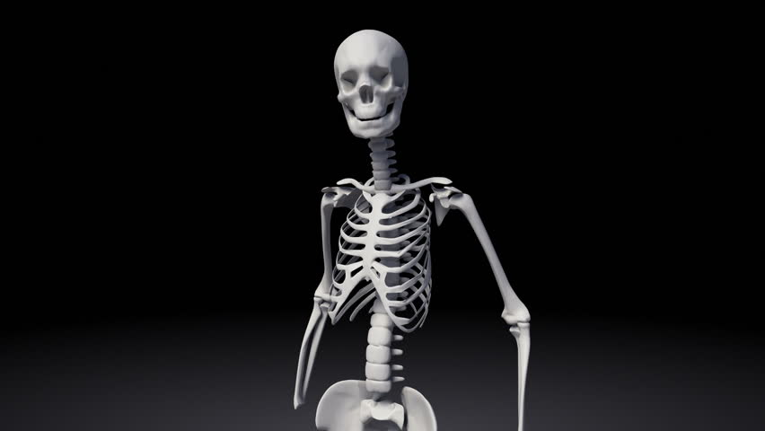 the human skeletal system. stock footage video 19179442 | shutterstock, Skeleton