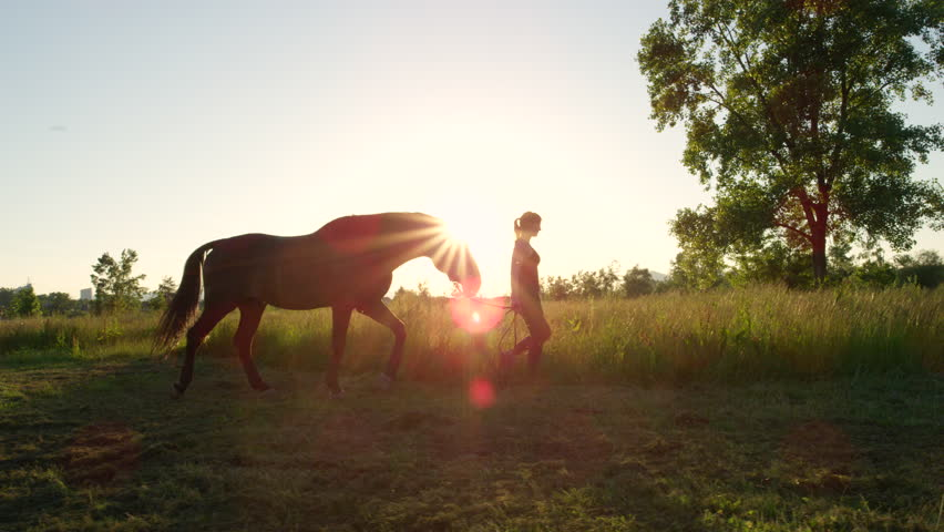 SLOW MOTION, CLOSE UP: Young girl taking on a walk her dark bay stallion by the reins on stunning golden sunset. Beautiful mighty gelding horse walking and gazing on meadow field at sunny morning   Shutterstock HD Video #19183354