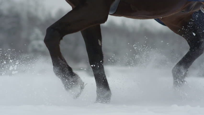SLOW MOTION CLOSE UP DOF: Big powerful dark bay horse trotting through white snowy blanket. Powerful brown gelding stepping on field covered with dry powder snow, snowflakes rising and flying around   Shutterstock HD Video #19241830