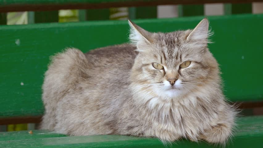 Video Bench Part - 34: Cat Sitting On Bench Slow Motion Video - HD Stock Video Clip