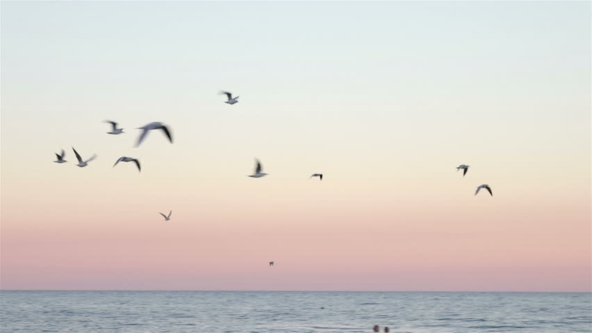 Flock of seagulls flying over the sea at sunset in slow motion | Shutterstock HD Video #19315519