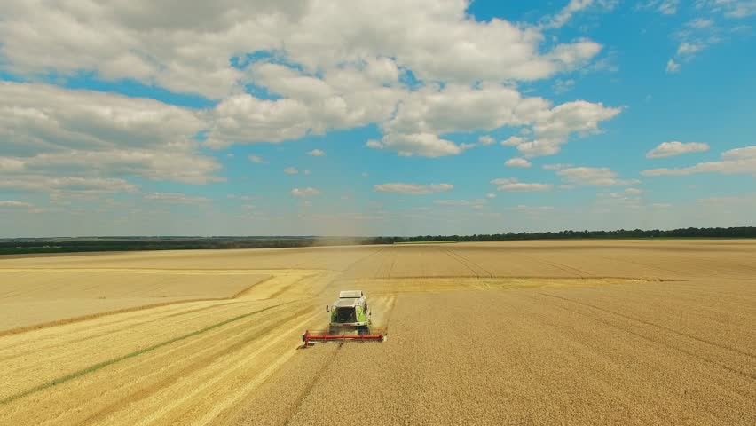 Harvester in wheat rye field aerial static view 4k video. Harvest agriculture farm rural landscape. Bread production concept: combine crops grain.