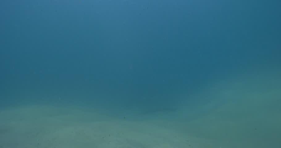 Ocean scenery lone fish looking for the school, on sand channel rock wall, 4K UltraHD, UP34792 | Shutterstock HD Video #19443328