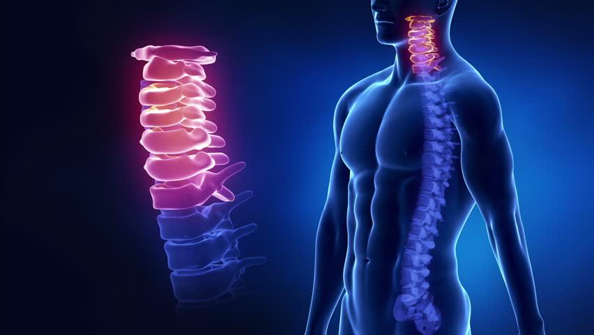Focused on spine CERVICAL region in loop