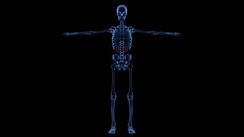 Full Human Skeleton Stock Video Footage - 4K and HD Video Clips |  Shutterstock