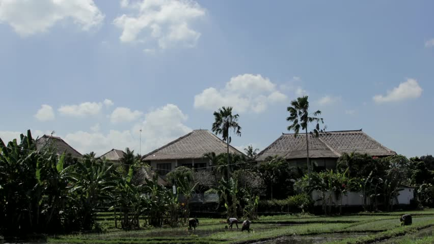 Bali/indonesia - Sep 14 2016: Women Planting Rice in Field, on the Background of Palm Trees, Field Filled With Water, Sunny Day, Fast-Moving Clouds
