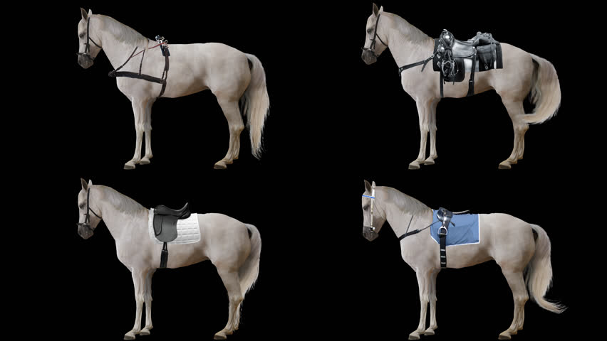 Horse is harnessed and saddled standing. Variations Saddle: sports, racing, cowboy. Animation isolated and looped.