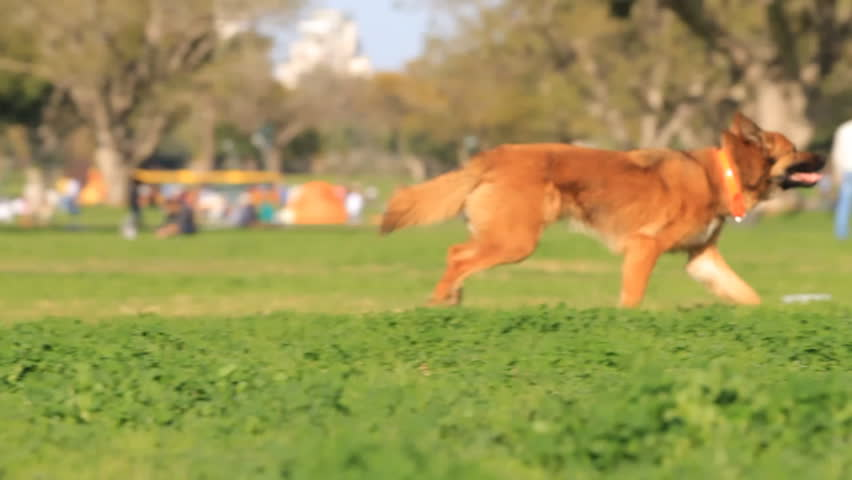 Men and dog playing in the park. Slow motion