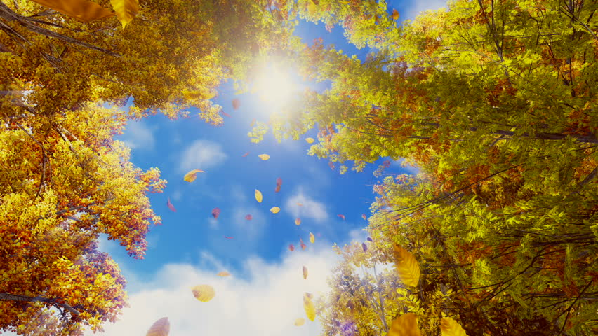 Motion through golden autumn leaves falling from trees in slow motion against bright sunny sky background. Fall season realistic 3D animation.