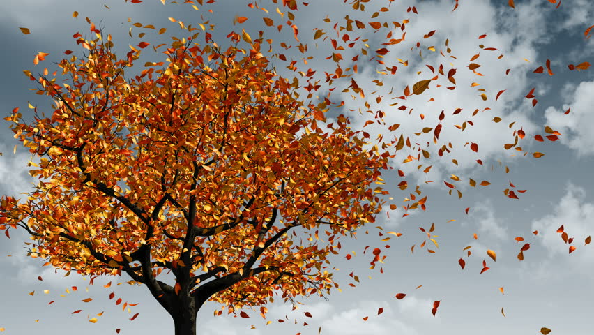 Free fall leaves stock video footage (743 free downloads).
