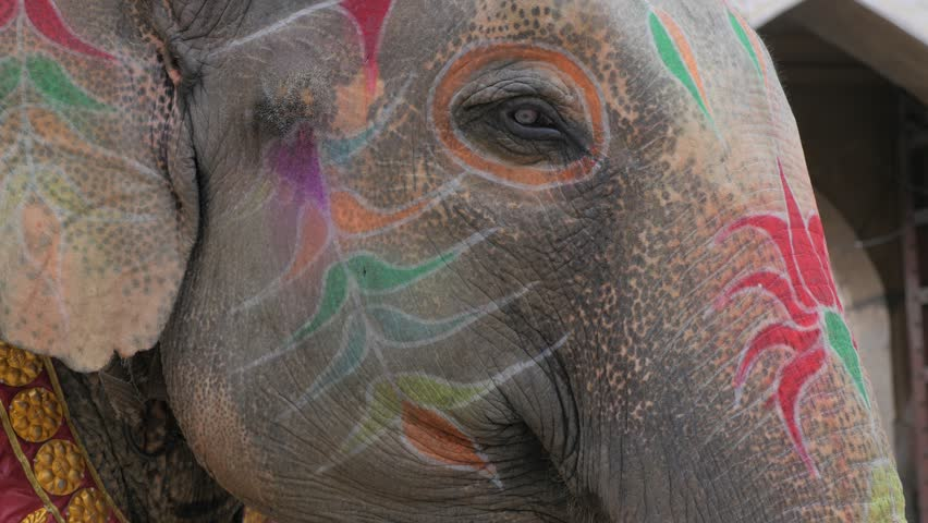 Jaipur,Gangaur,India - April 10,2016: Face of elephant painted for festival