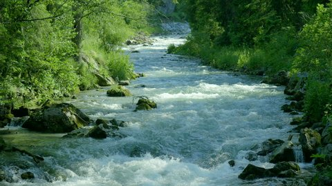 Fast running creek green forest mountain stream fresh clean water sunny Austria Alps beautiful nature