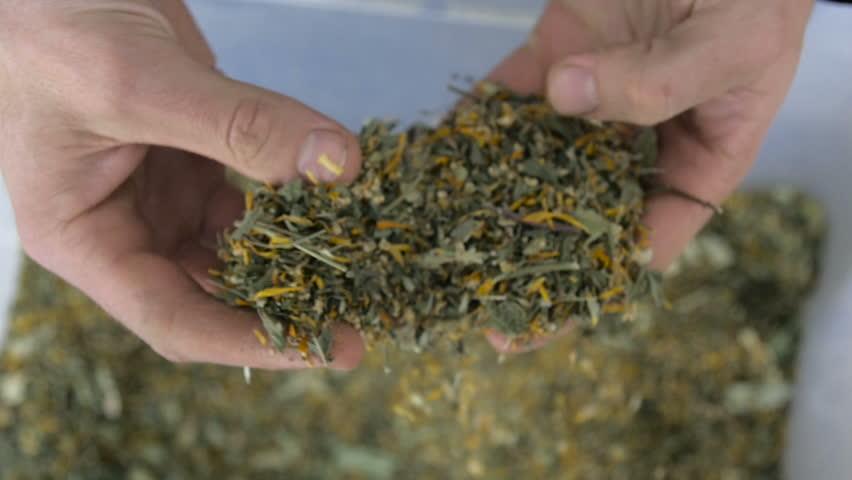 Farmers pick tea leaves