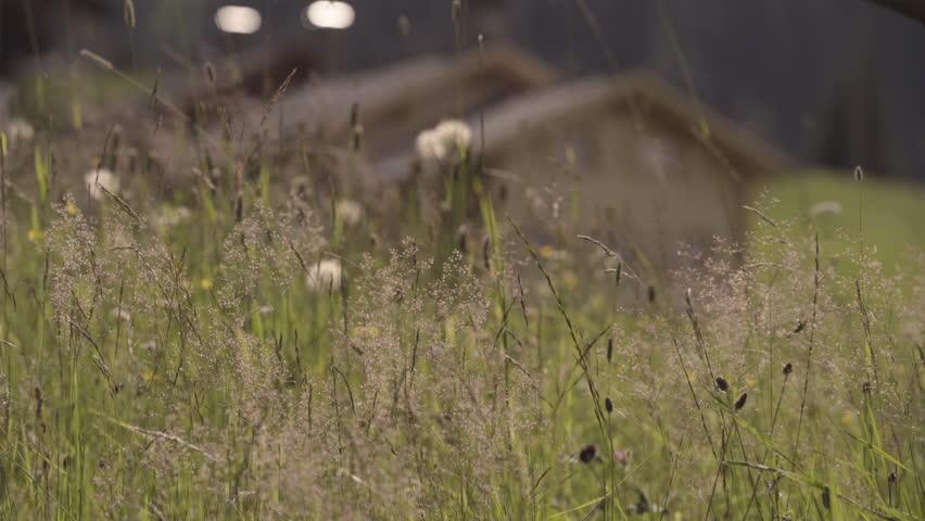 Austria Montafon Meadow / Hut   4K Stock Footage Clip