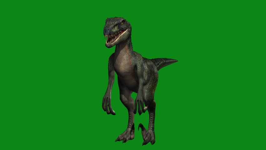 dinosaur raptor idle with green screen animation #20238112