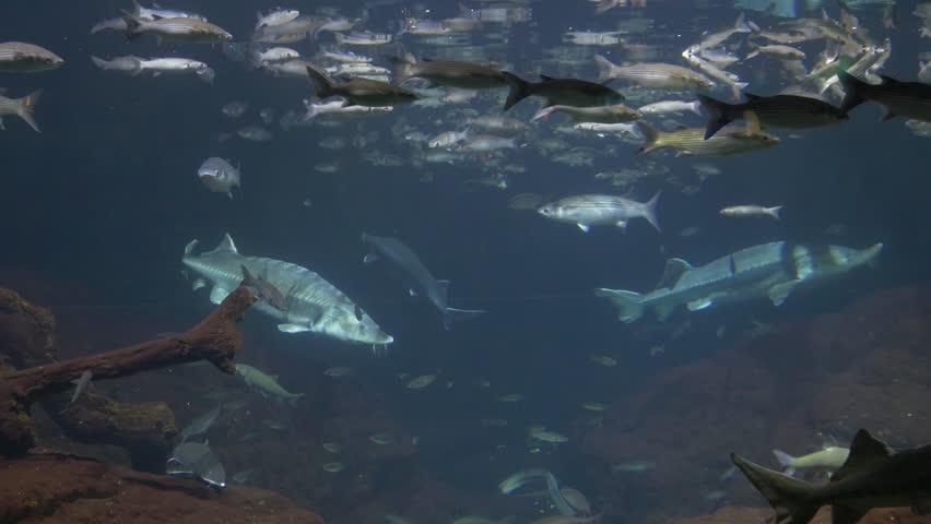 Fish in the aquarium in Barcelona | Shutterstock HD Video #20241982