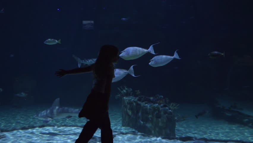 Little Girl Walks Next To Aquarium Tank, She Grazes The Glass With Her Hand