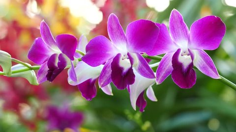 Beautiful Orchid flowers blooming in the garden 4K