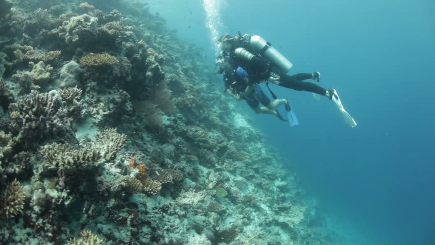 scuba divers looking at coral reef