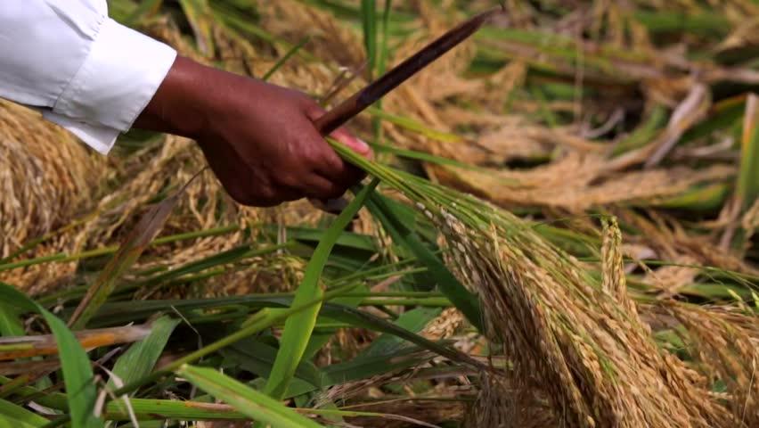 music of kung bushmen of the kalahari desert africa