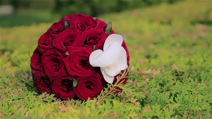 Red Rose Wedding Bouqet.Wedding Bouquet Wedding Bouquet With Stock Footage Video 100 Royalty Free 20588872 Shutterstock