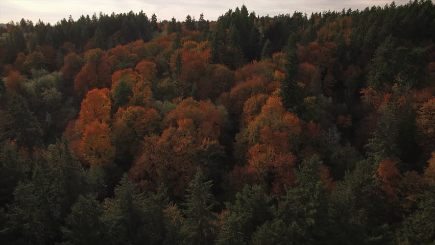 Stock Video Clip of Slow Floating Aerial Above Thick Forest Trees | Shutterstock & Stock Video Clip of Slow Floating Aerial Above Thick Forest Trees ...