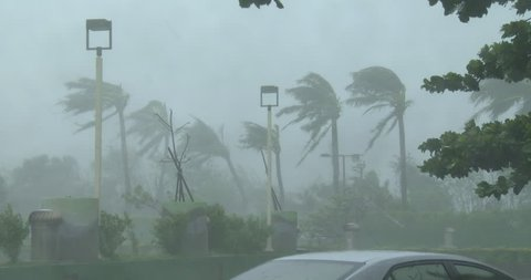 Palm Trees Sway And Thrash In Powerful Hurricane Wind.