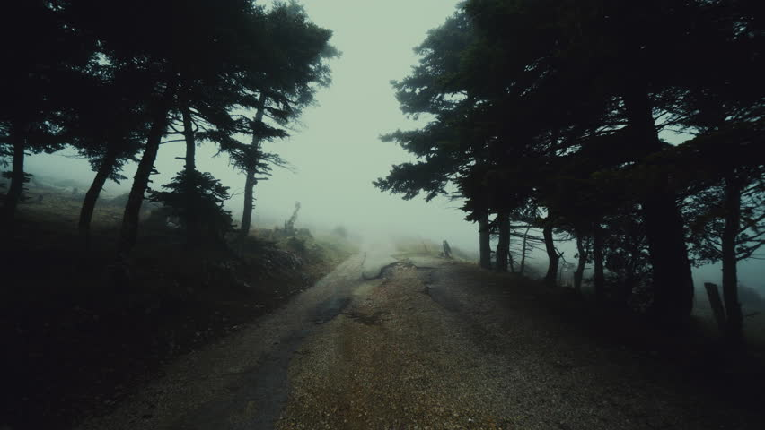 Pov Gimbal Shot Of Someone Walking On A Dark Scary And Ominous Path Foggy Misty Forest