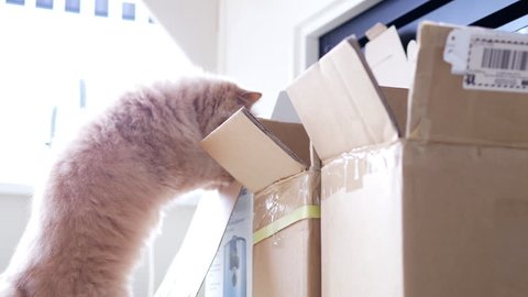 Persian cat jumpping into a box with over white exposure backlight