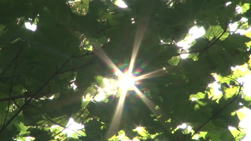 Beautiful sun rays pass through the leaves of the tree | Shutterstock HD Video #21147322