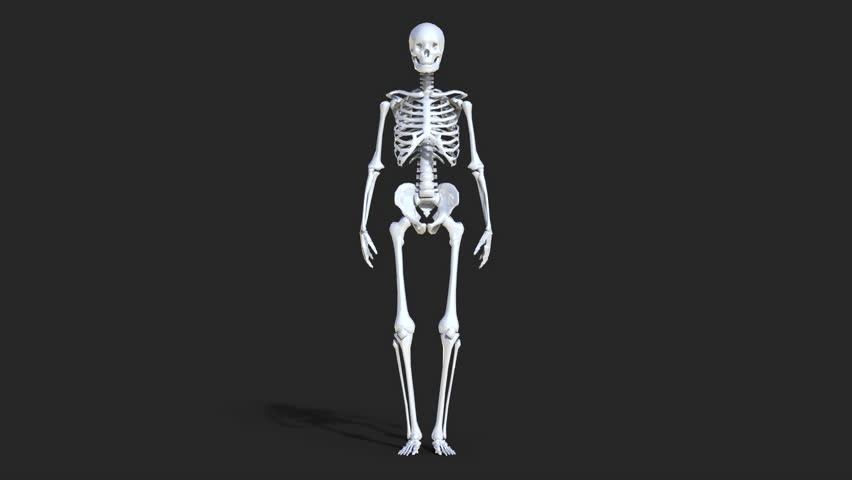 Plastic glossy layout of the human skeleton. Skeleton rotating on black background. 3d illustration with an alpha channel. 3d rendering.