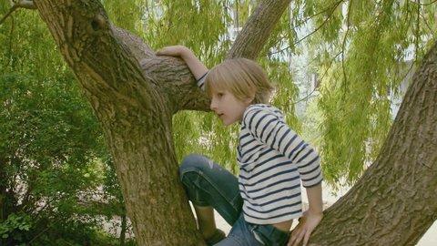 boy climbs a tree.